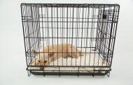 Låt pälsklingen transporteras i en bekväm hundbur